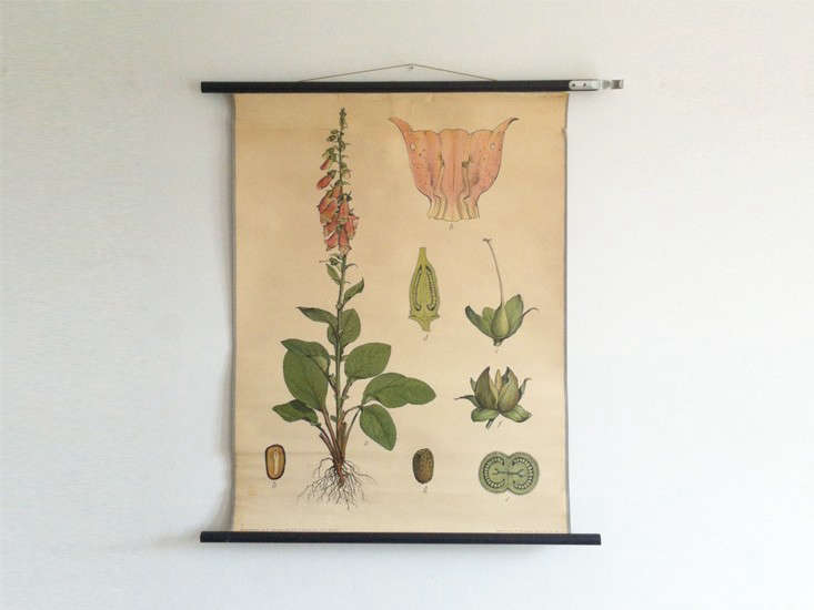 Favorite Botanical Illustrations: Our 10 Best Sources for Vintage