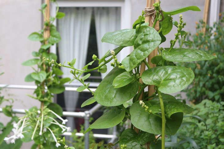 Charming Apartment Garden Ideas To Steal Statuesque Plants Viljoen