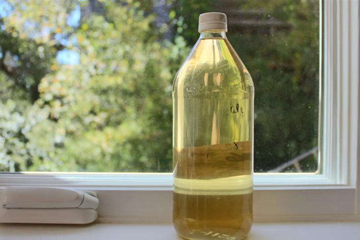 DIY: The Best Garden Insecticide (and No Harmful Chemicals