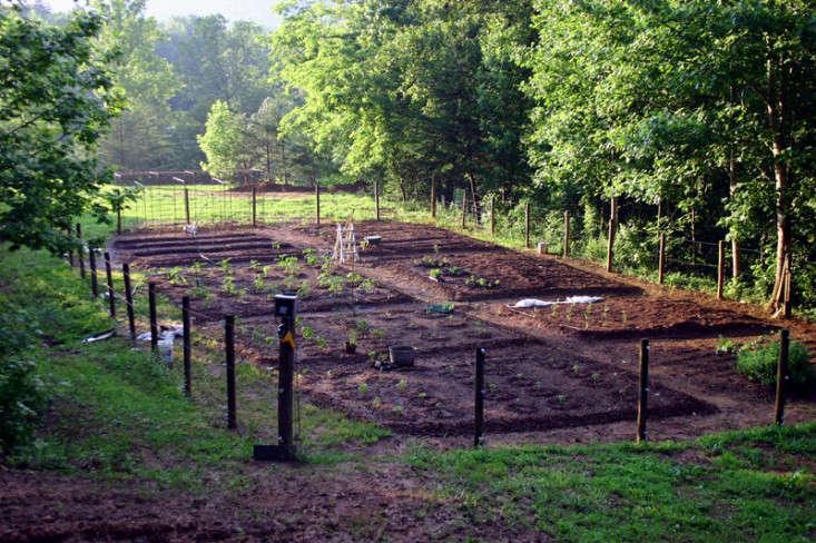 Bean Tunnel Diy Vegetable Garden 1 Gardenista