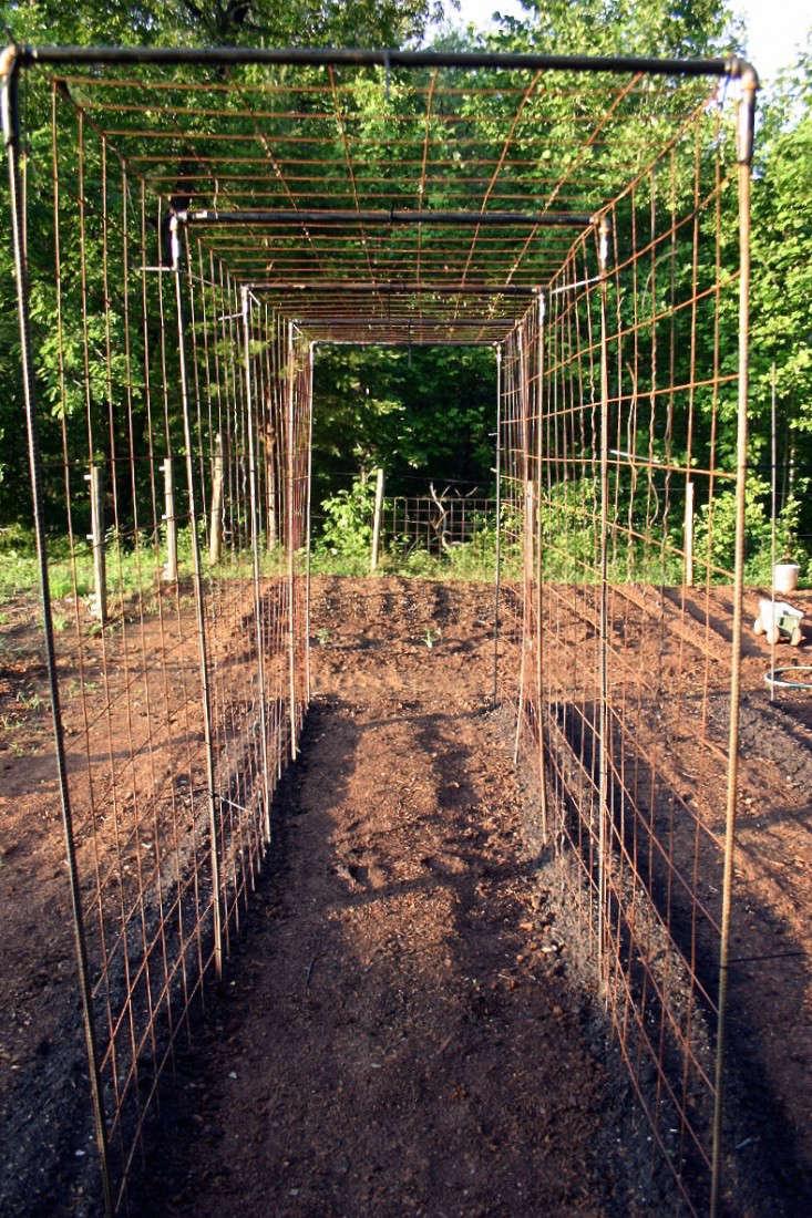 Vegetable Garden Design: DIY Bean Trellis - Gardenista