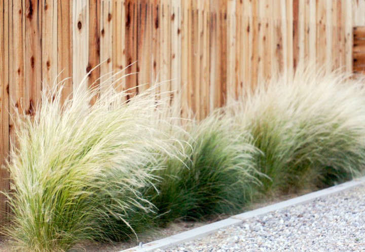 Gossamer gardens 11 ideas for landscaping with mexican feather before and after front yard landscaping brick house workwithnaturefo