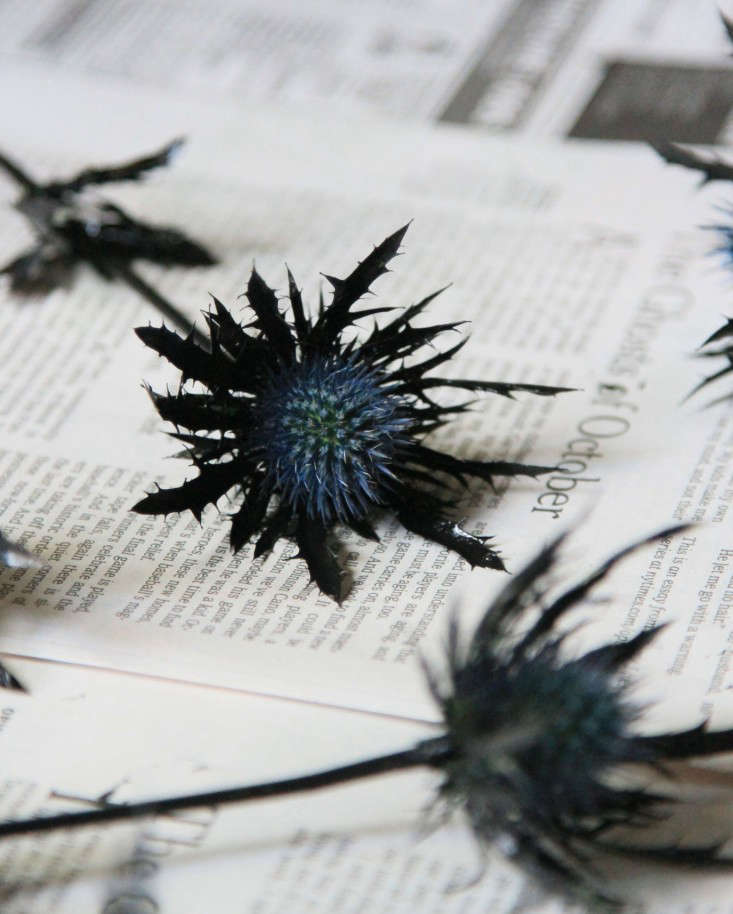 Diy A Black Thistle Bouquet For Halloween Gardenista