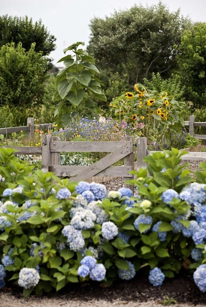See more of this garden in�Rhode Island Roses: A Seaside Summer Garden in New England.�Photograph by Nathan Fried Lipski of�Nate Photography.