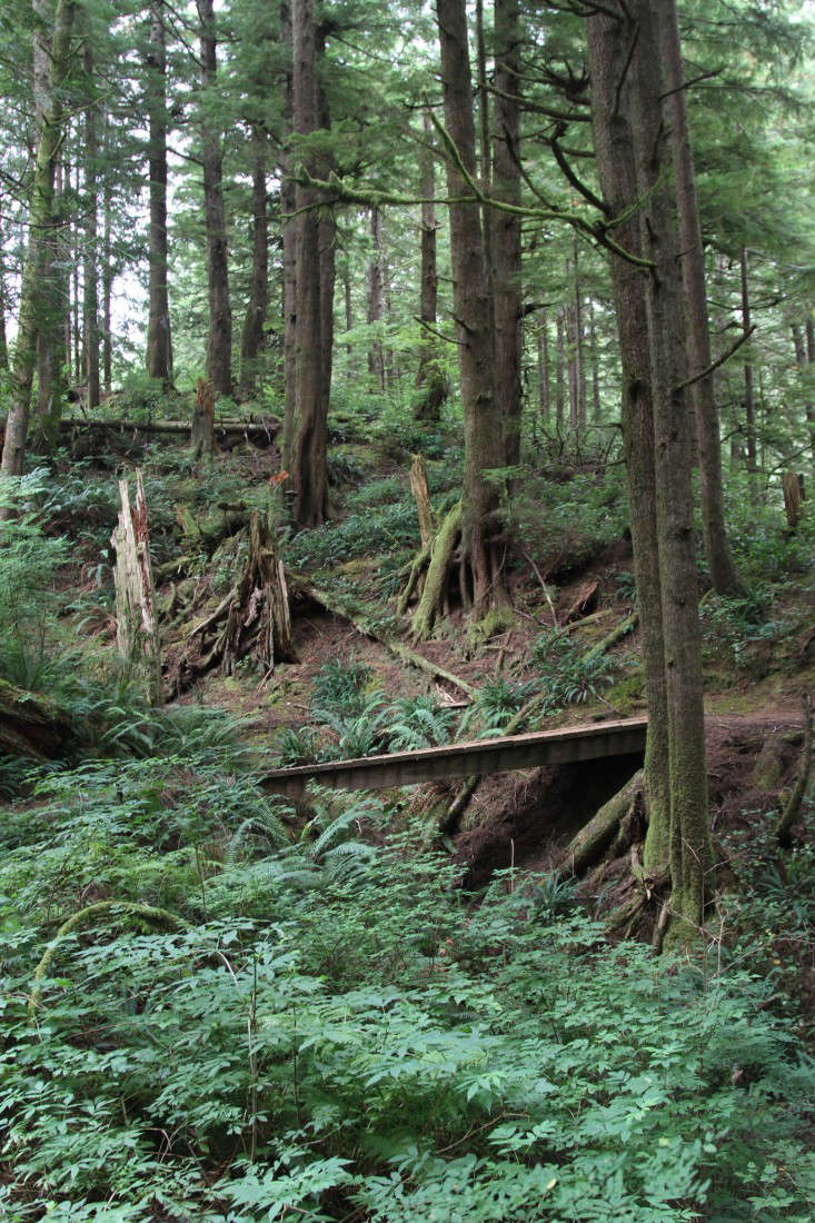 Hike of the Week: Oswald West State Park, Oregon - Gardenista