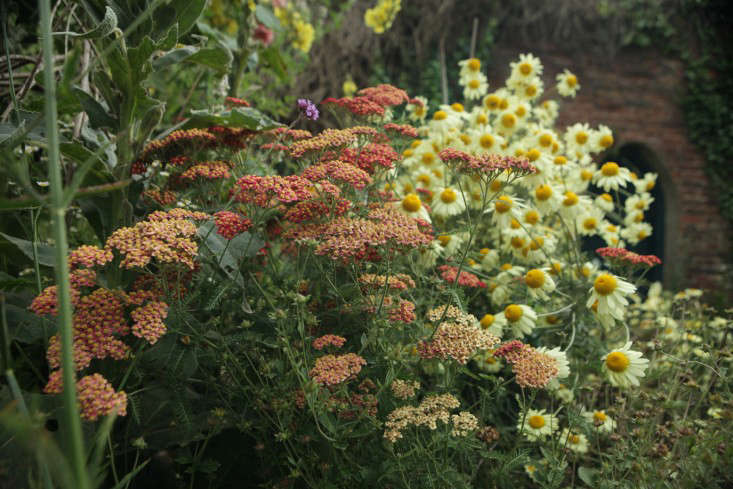 Above: Red Toned Achillea U0027Fanalu0027 Adds To This Drought Tolerant Collection  In Artist Celia Hartu0027s England Garden. To See More Of This Charming Gardenu2014and  ...
