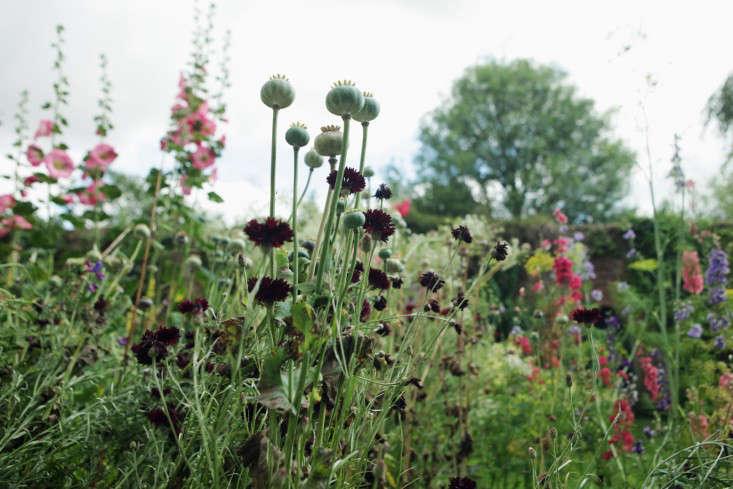 在维也纳花园里还有一间花园里的另一个女孩,她的英语和英国的英语。给约翰·卡弗的照片。
