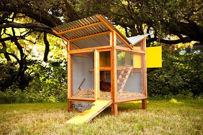 Modern Chicken Coop - Chicken co op with flowers