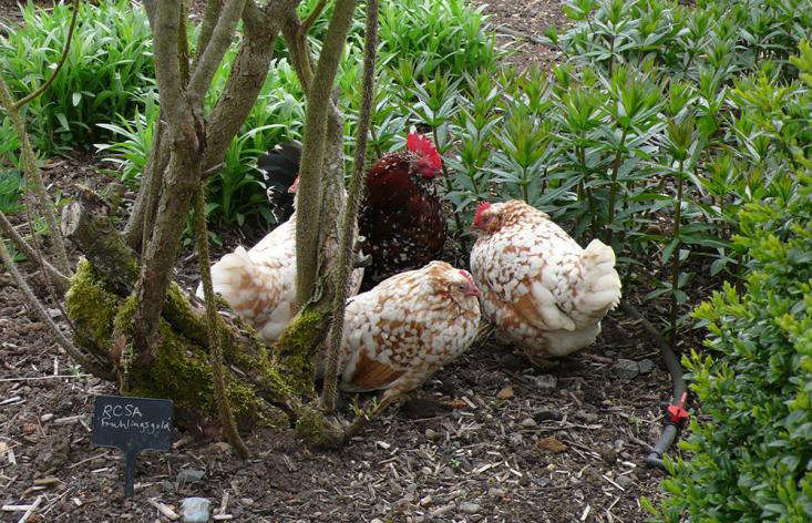 The Trouble with Chickens (and Ducks, Donkeys, and Flamingos