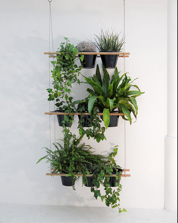 Etcetera window box - How to hang plants in front of windows ...