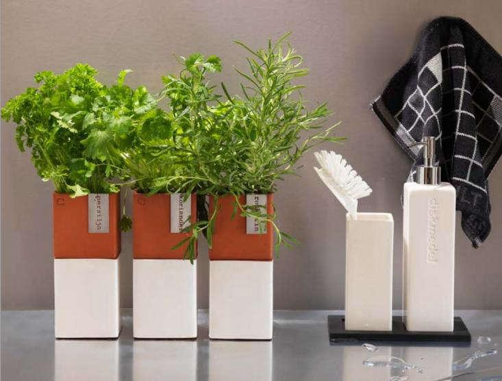 A Kitchen Garden You Can Sprout on a Countertop Gardenista