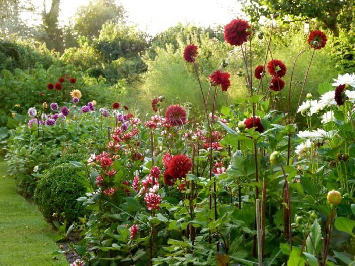 Beau Dahlias Staked Ben Pentreath Gardenista