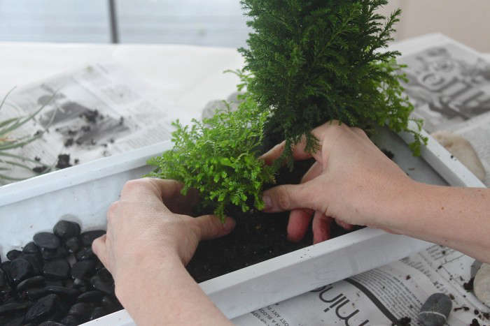For More On Bonsai, See Ask The Expert: Bonsai Basics With Eric Schrader.