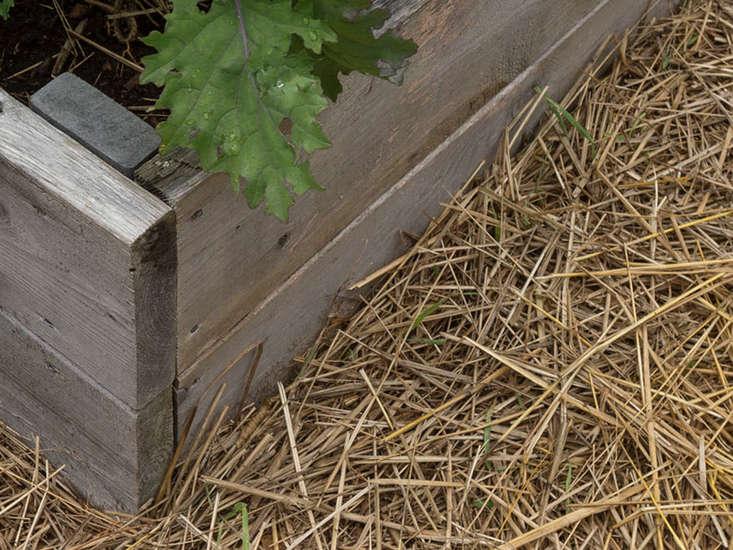 fall-clean-up-straw-mulch-gardenista