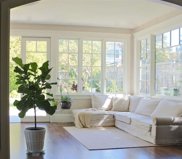 fiddle leaf fig trees in family room - Fiddle Leaf Fig Tree