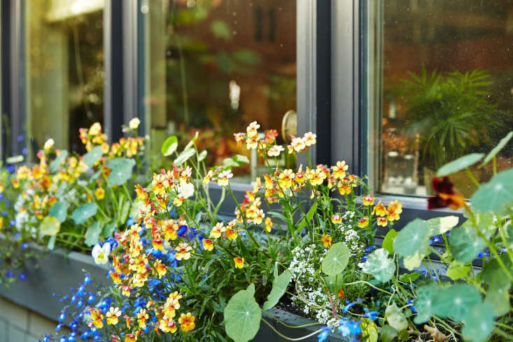 A riot of color in a window box reinforces the theme.