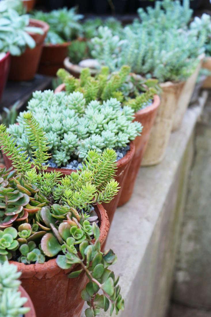 11 Garden Ideas to Steal from South Africa - Gardenista