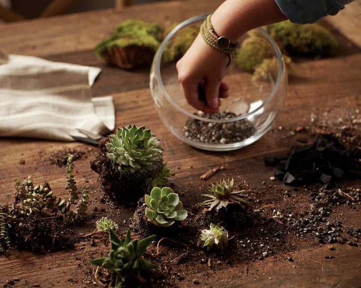 Gardening 101 How To Plant An Open Terrarium Gardenista