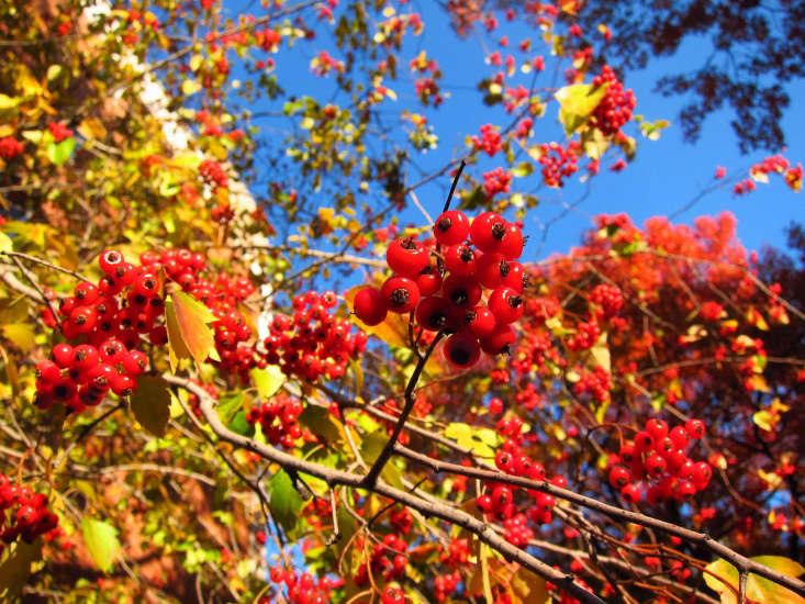 El jardín salvaje: Base de datos de plantas nativas del noroeste de Hansen