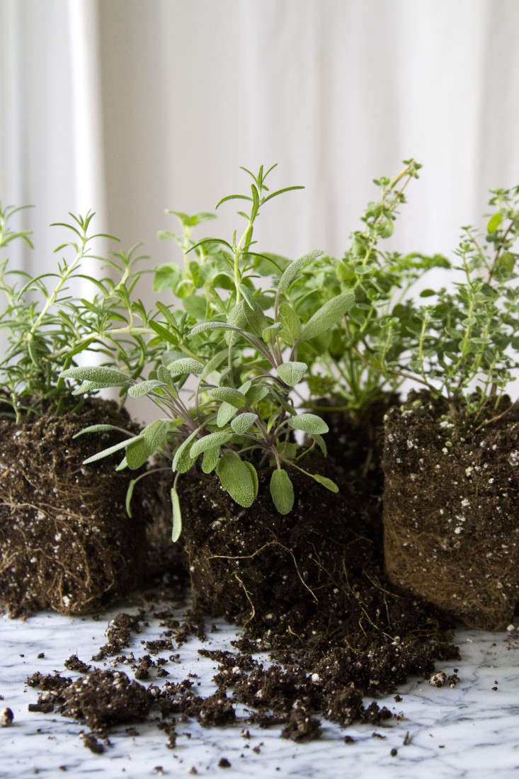 Small Space DIY: Countertop Herb Garden