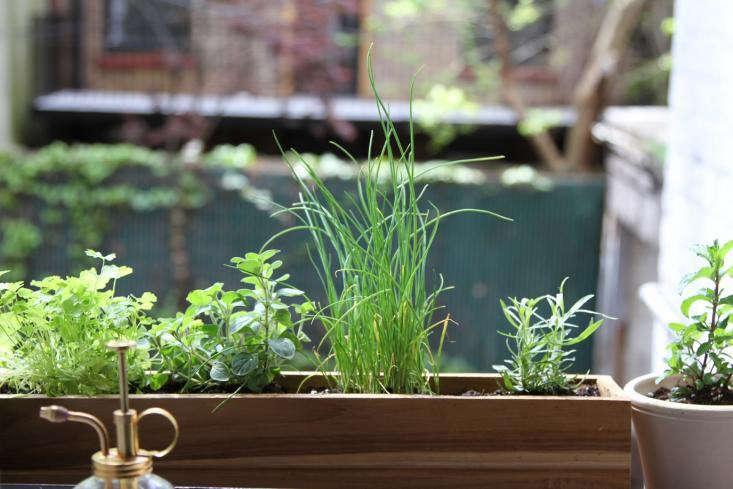 herbs on windowsill erin boyle