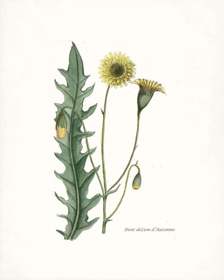 Favorite Botanical Illustrations: Our 10 Best Sources for Vintage
