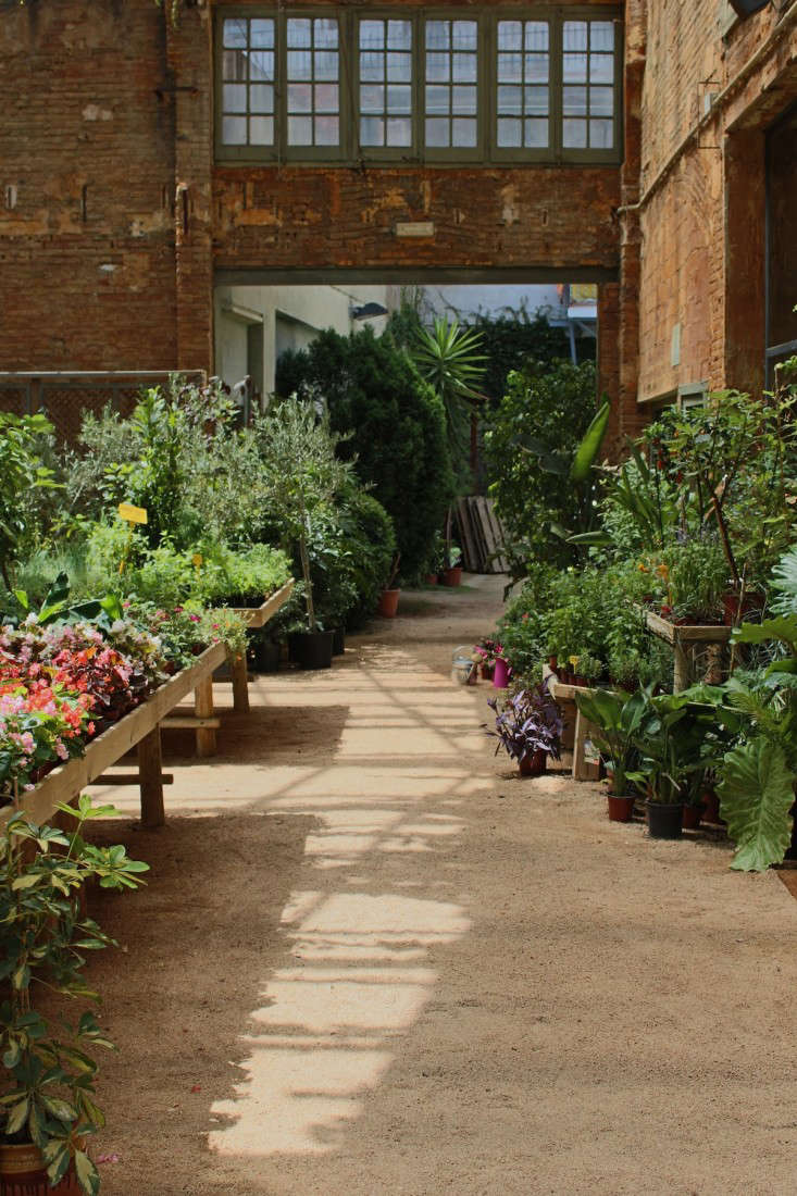 Where Florists Go to Buy Their Plants - Gardenista