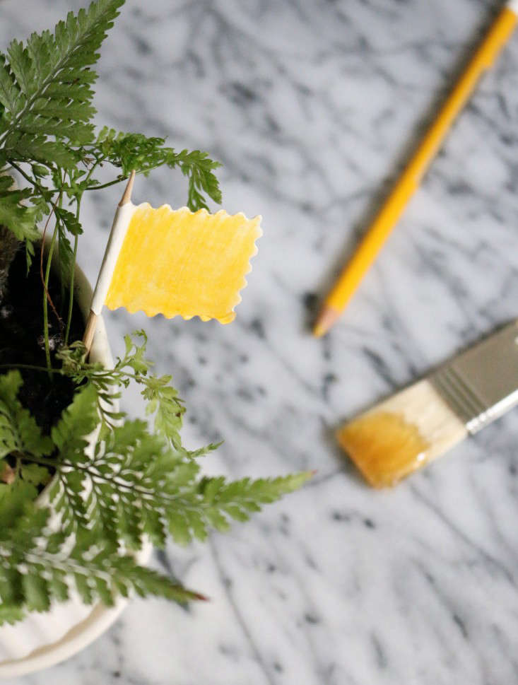 Fungus Gnats And Ding Off Can Seriously Harm Growing Seedlings But The Solution To