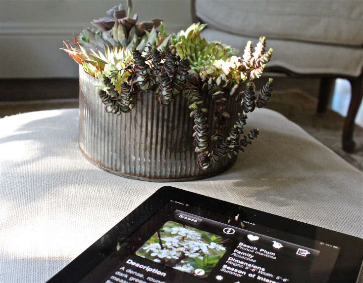 10 Best Garden Design Apps For Your Ipad - Gardenista