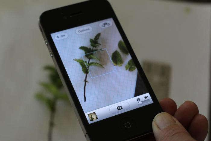 garden app. Iphone-app-leafsnap-gardenista Garden App
