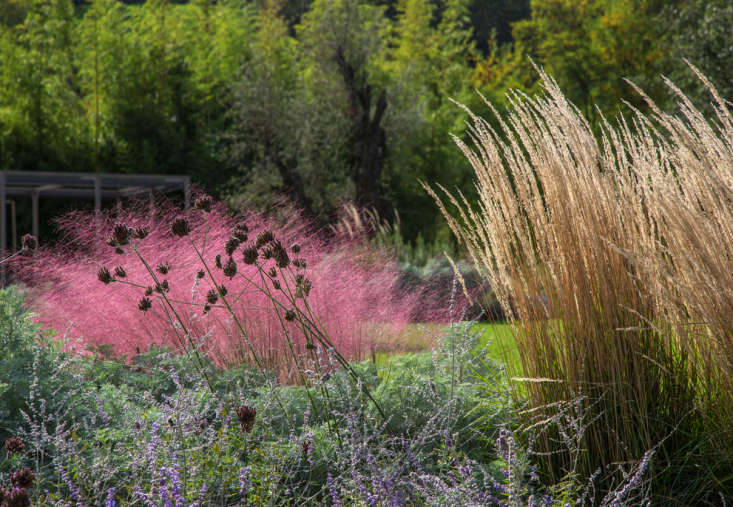 Pink grasses 11 ideas for muhlenbergia in a landscape gardenista photograph by dario fusaro courtesy of cristiana ruspa mightylinksfo