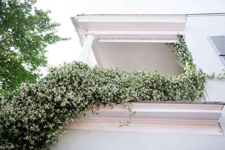 Gardening 101: Jasmine - Gardenista