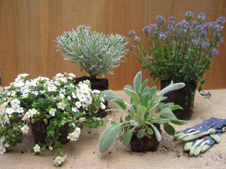 Terrific Diy Outdoor Planters A Cool Palette For Hot Weather Download Free Architecture Designs Scobabritishbridgeorg