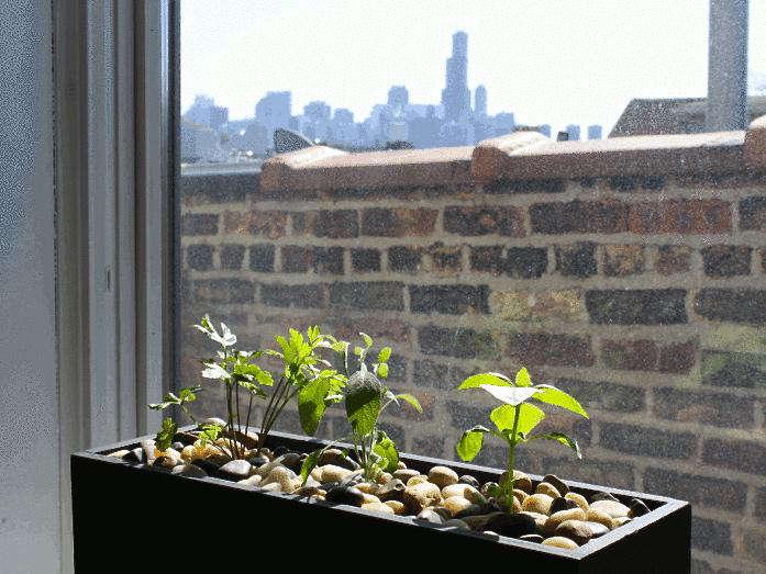 A Kickstarter Windowsill Planter That Waters Itself - Gardenista