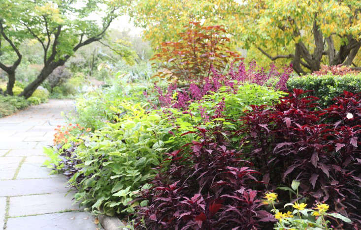 Color Theory 10 Perfect Plant Combinations For Autumn Gardenista