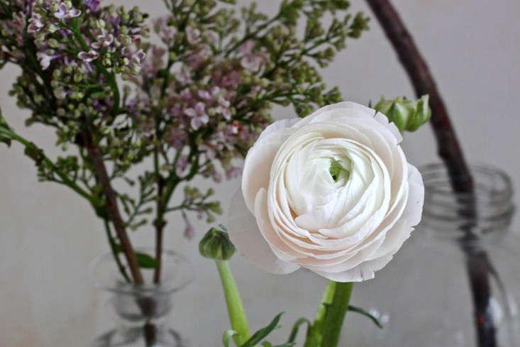 Test Drive Which Cut Flowers Last Longest Gardenista