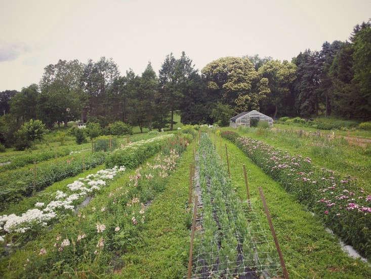 Urban Flower Farm: Love \'n Fresh in Philadelphia - Gardenista