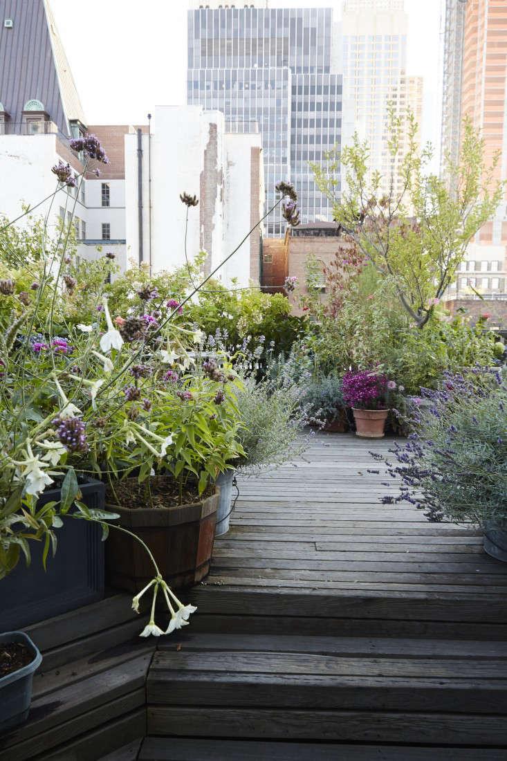 Roof Garden Design Ideas Rooftop Terrace