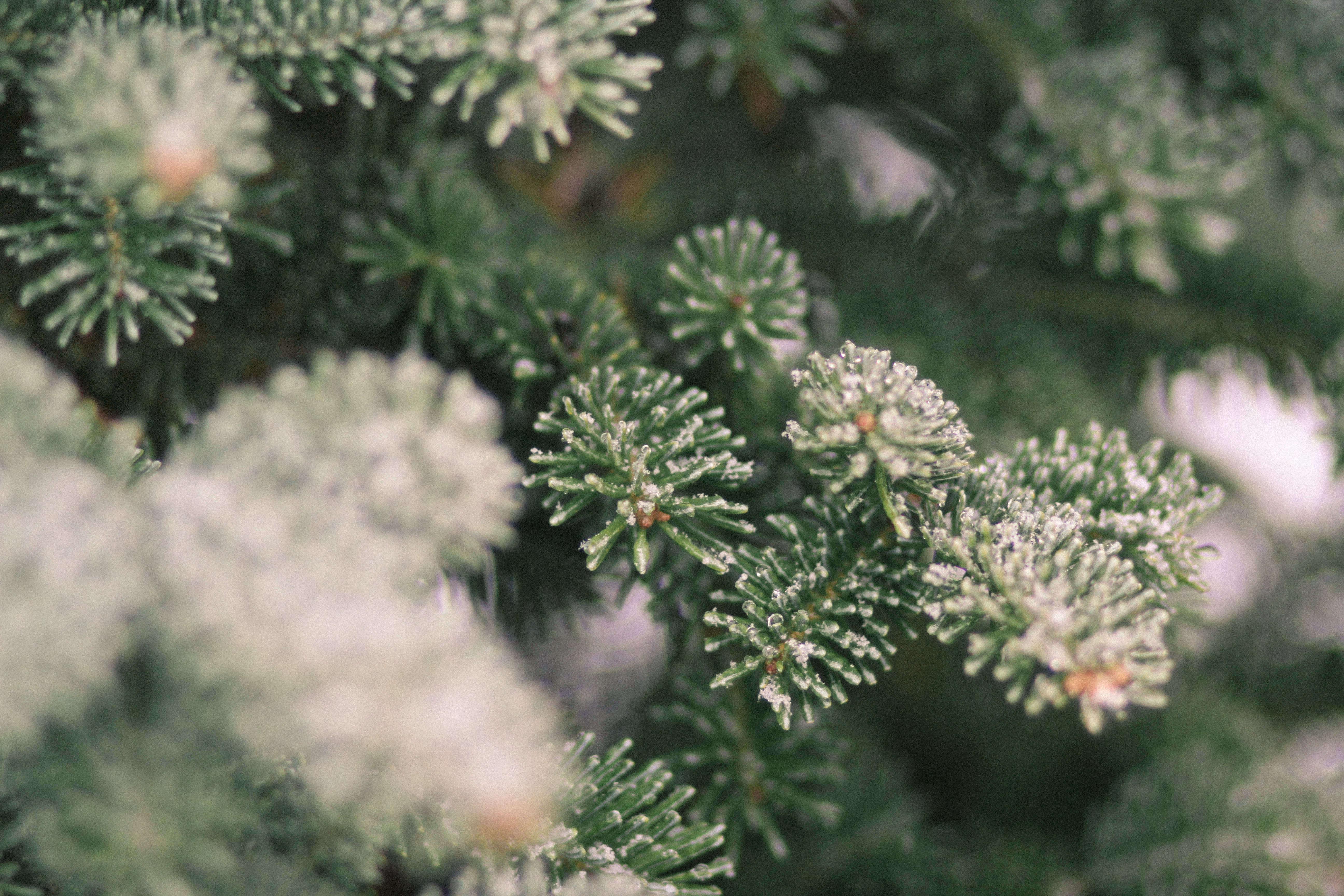 Shopper\'s Diary: A Christmas Tree Farm in Maine - Gardenista