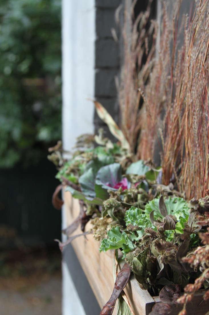 Ornamental kale in a window box. Photograph by Erin Boyle.