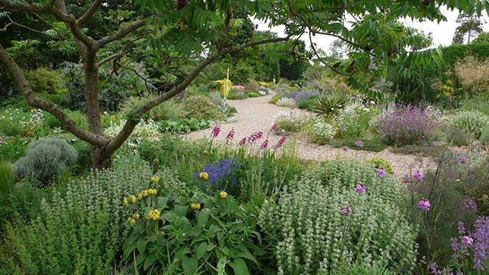 Superbe Beth Chatto Gravel Garden Gladiolas Gardenista