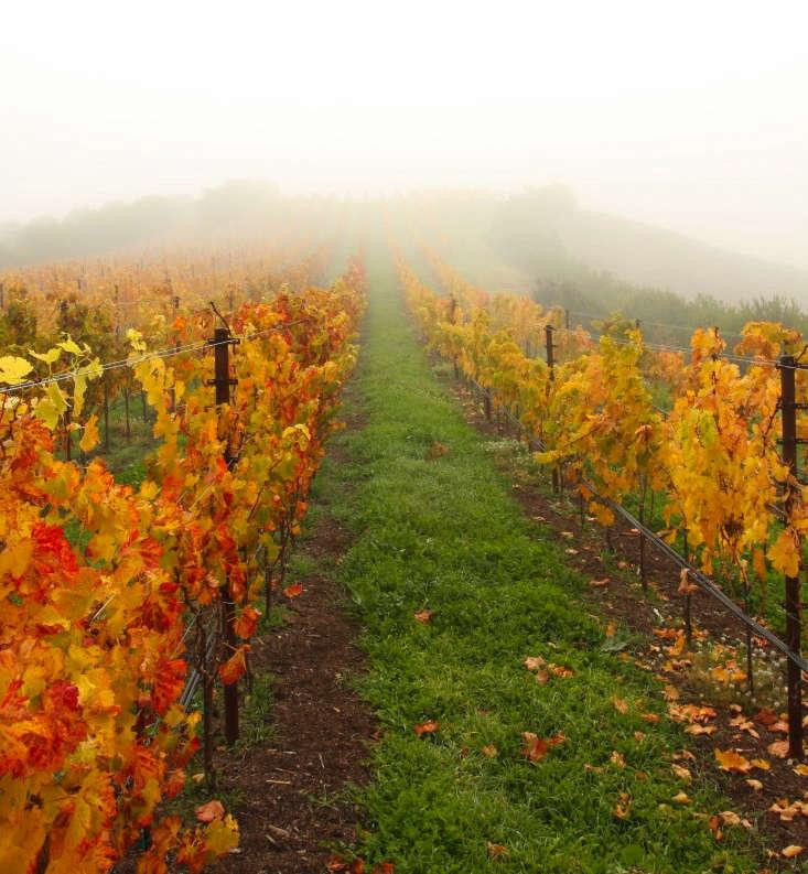 California Colors Fall At Mcevoy Ranch In Petaluma