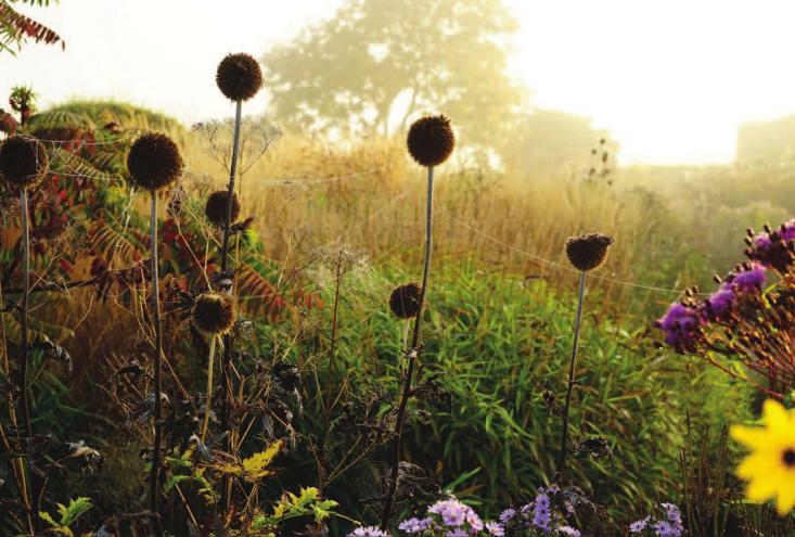 Photograph viaHummelo: A Journey Through a Plantsman's Life.