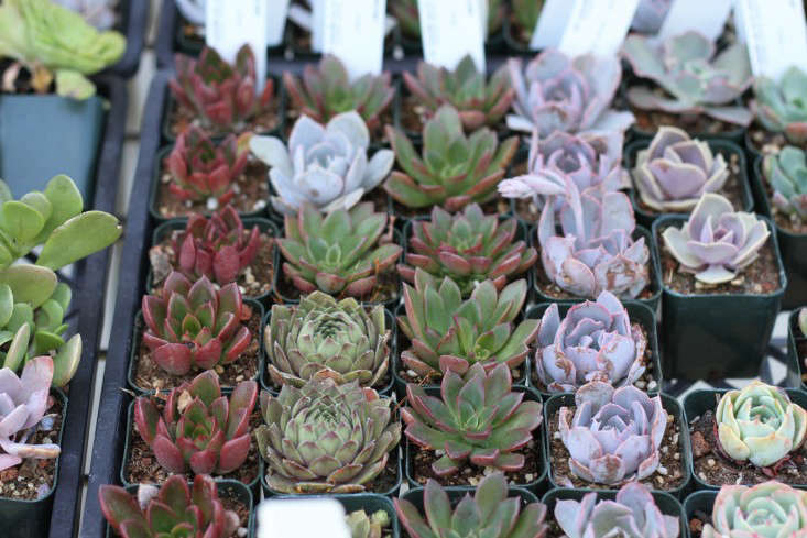 From Flora Grubb Gardens 9 Secrets To Growing Succulent Plants