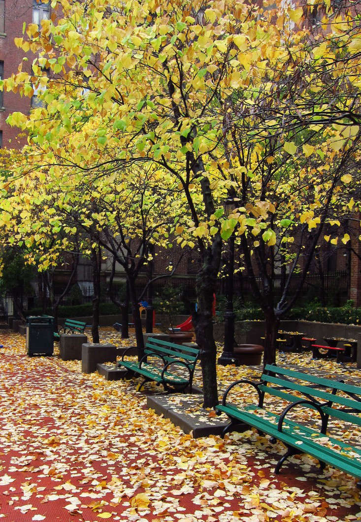 11 Best Trees To Plant For New England Style Foliage Gardenista