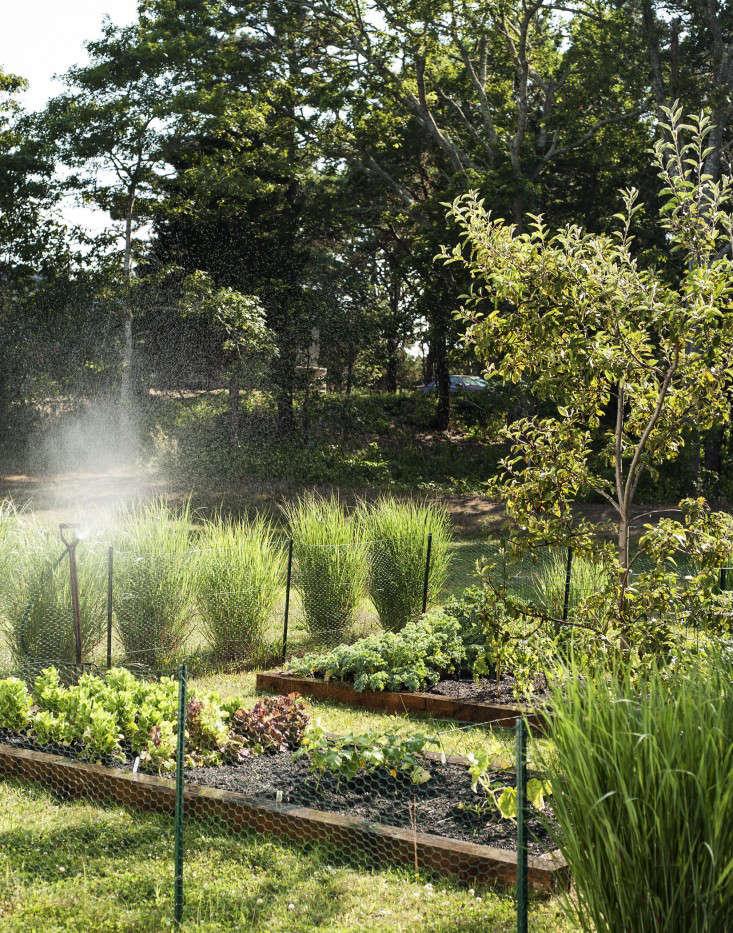 The Garden Decoder: What Is 'Companion Planting'? - Gardenista