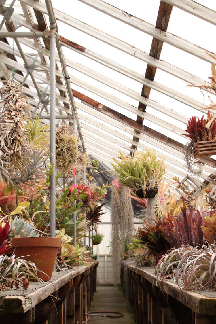 Above: Shelldance Orchid Is Divided Into Five Greenhouse U201cgarden Rooms.u201d  Pictured Above Is The North Wing With A Variety Of Plants On Display, ...
