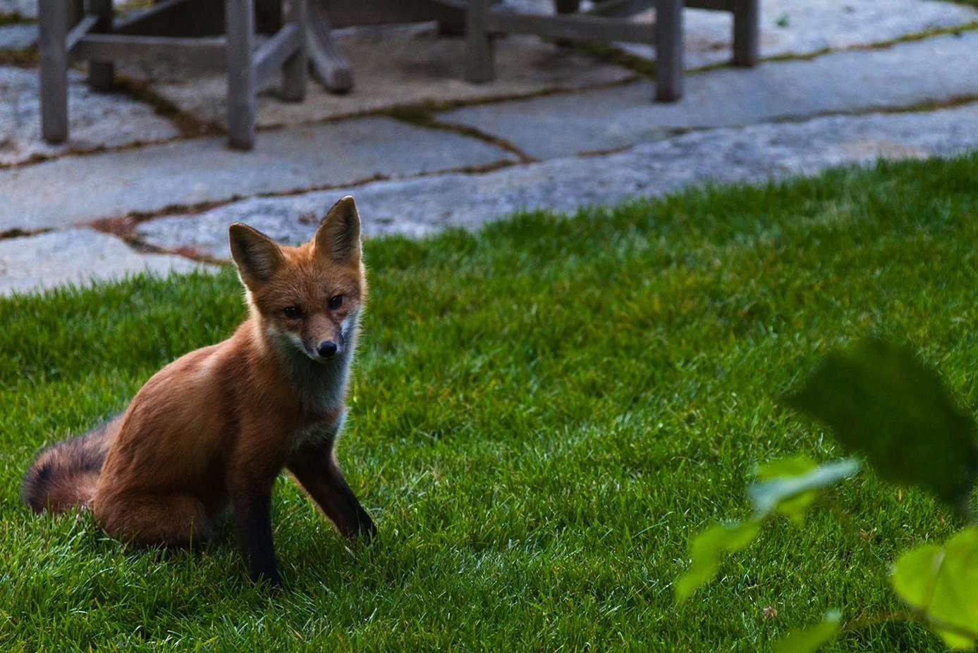 野生动物和其他野生动物的野生动物都在全国各地。