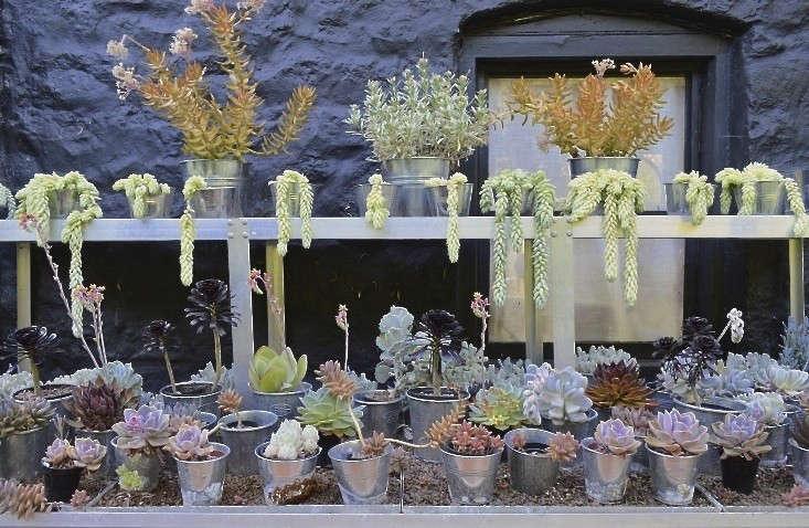 steal this look an indoor succulent garden shiny shelving included gardenista - Indoor Succulent Garden