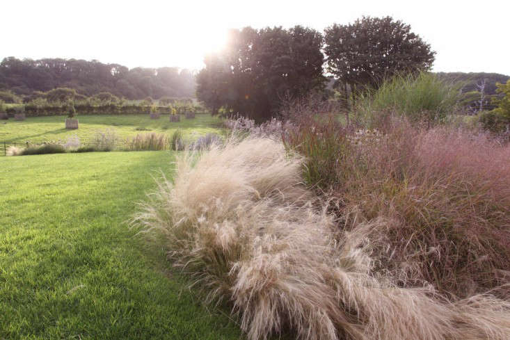 Stipa tenuissima (Mexican feather grass or Nassella tenuissima) features bursts of feathery panicles, which change from foamy green to blonde. Photograph courtesy of Robert Kennett, from Gardening 101: Stipa Grasses.